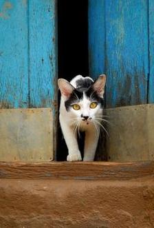 artsy cat pic
