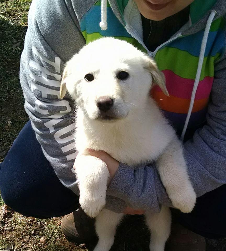 poloar bear pup
